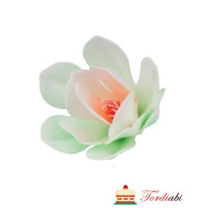 Tordiabi vahvlilill heleroheline magnoolia
